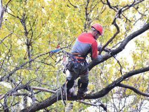 Обрезка деревьев Белгород