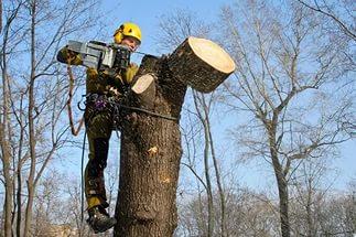 Кронирование деревьев Белгород