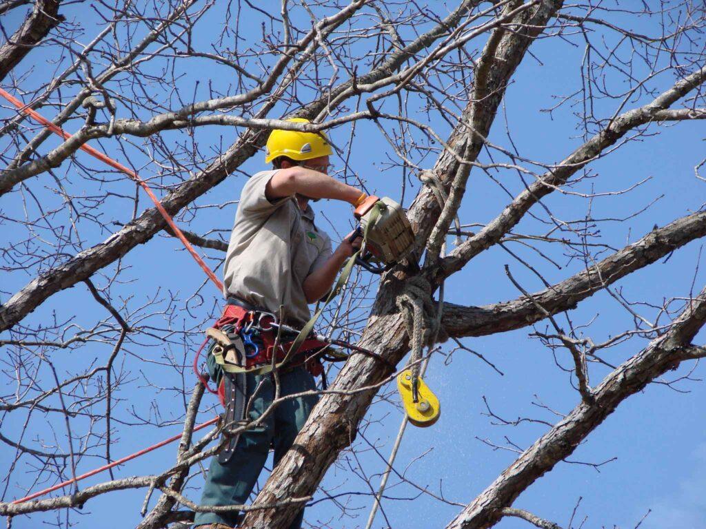 Удаление деревьев Белгород